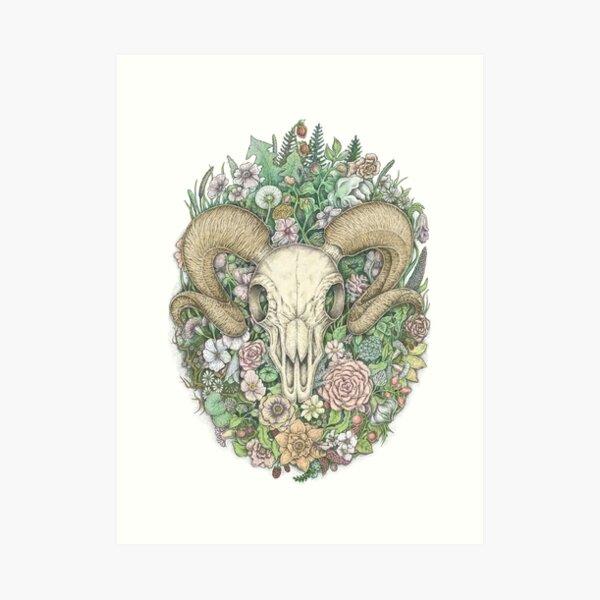 Life's Mystery: Ram Skull. Colored Version Art Print