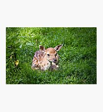 Adorable Fawn Photographic Print