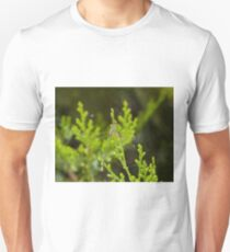 Migrant Spreadwing Damselfly T-Shirt