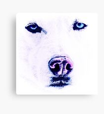 White Husky with Blue Eyes Canvas Print