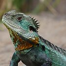 Water Dragon by Sharon Brown