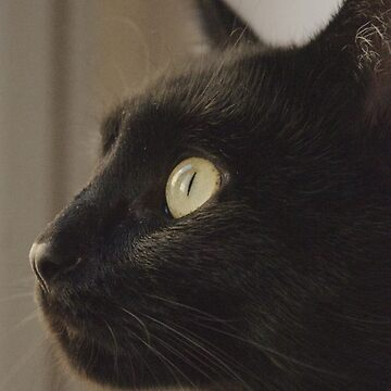 Black Cat Profile by louisefahy