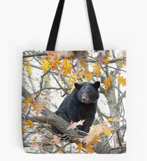 Black bear in tree Tote Bag