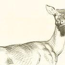 Whitetail Deer by dbclemons