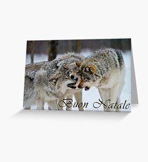 Timber Wolf Christmas Card - Italian - 13 Greeting Card