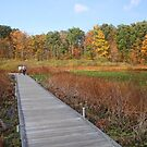 Punderson Boardwalk by Jack Ryan