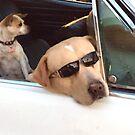 California Cruising  by Christine  Wilson