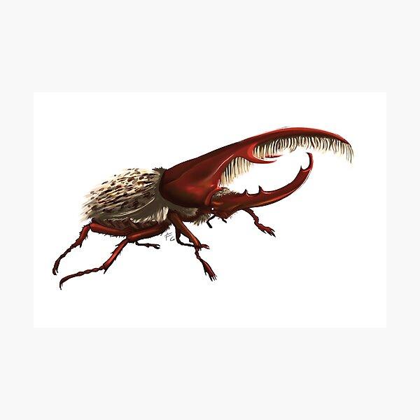 hercules beetle Fotodruck