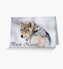 Timber Wolf Christmas Card - Italian - 19 Greeting Card