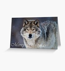 Timber Wolf Christmas Card - English - 20 Greeting Card