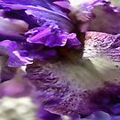 Purple, Violet and Mauve Iris Abstract by taiche