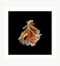 Beautiful Siamese Fighting Fish Art Print