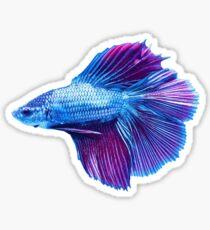 Emerald Blue Betta Siamese Fish Sticker