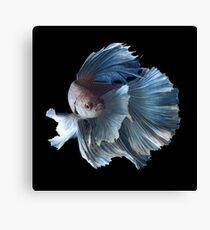 White Angel Siamese Betta Fish Canvas Print