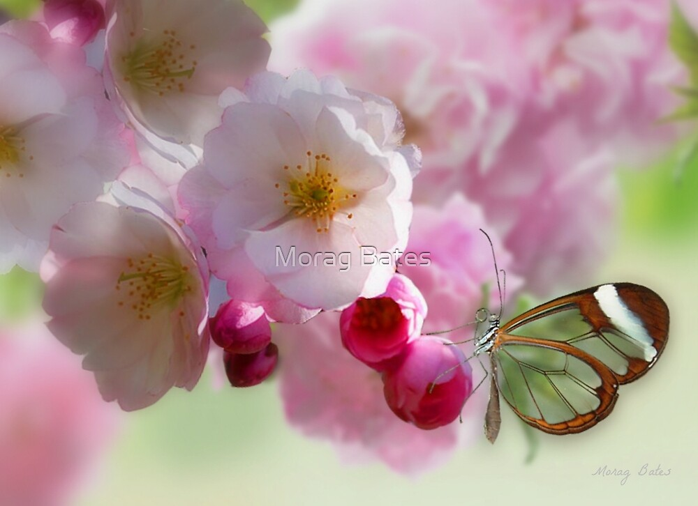 The Delicate Touch by Morag Bates