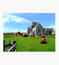 Iona Abbey, with cows Photographic Print