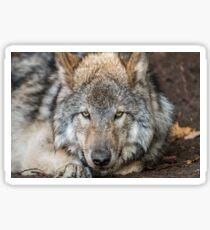 Timber Wolf Pup Sticker