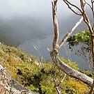 Dove Lake from Hanson's Track, Tasmania, Australia. by kaysharp