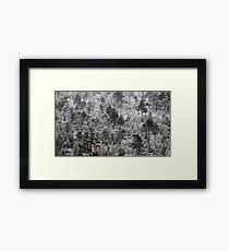 19.10.2016: Rime in the Forest Framed Print