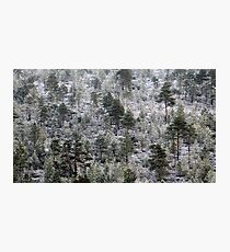 19.10.2016: Rime in the Forest Photographic Print