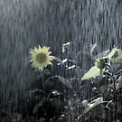 Painted Sunflower in the Rain by Wayne King