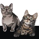 Kittens by Matt Mawson