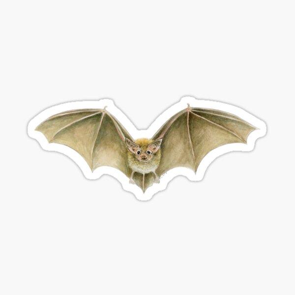 Daubenton's Bat Sticker