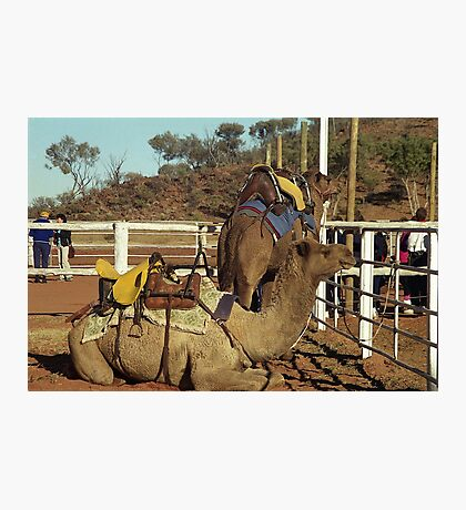 Camels, Alice Springs Photographic Print