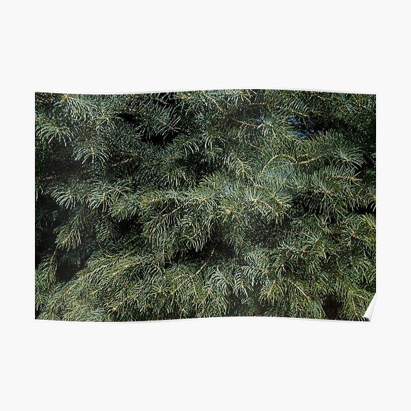 Fir Tree Pattern Poster