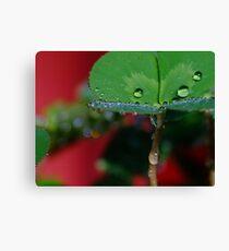 Raindrop Macro Canvas Print