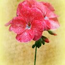 Bloom In Red by Christine Lake