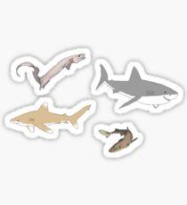 Sharks 1 Sticker