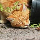Ginger cat stealing catnip plant by turniptowers