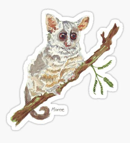 Pippin, the Bush baby Sticker
