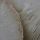 Double Mushroom Lamella by Lorelle Gromus
