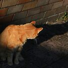Ginger cat and shadow by turniptowers