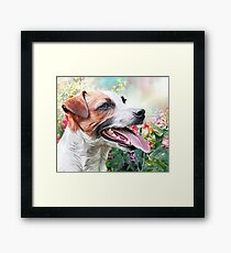 Jack Russell Terrier Painting  Framed Print