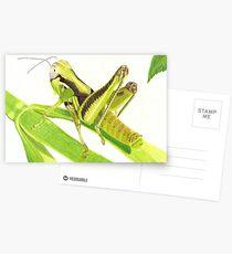 GrassHopper Postcards