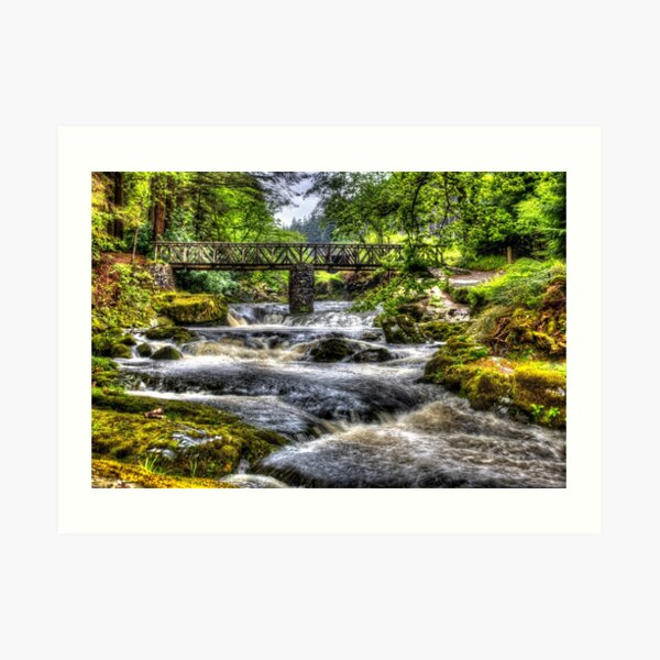 Tollymore Forest Park 2 Art Print