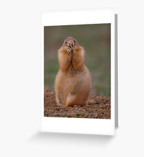 Prairie Dog with Funny Expression Greeting Card