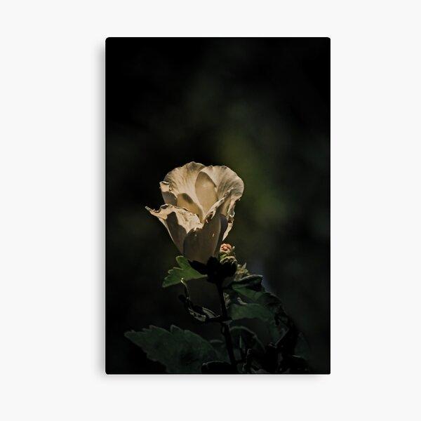Fairy Tale Rose Canvas Print