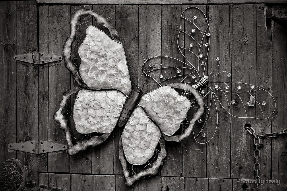 Butterflies - B&W by PhotosByHealy