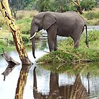 African Elephant, Serengeti National Park, Tanzania.  by Carole-Anne