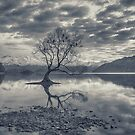 Nature awaking over Lake Wanaka by Linda Cutche