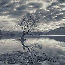 Nature awaking over Lake Wanaka by Linda Cutche