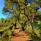 The Oak Trail by jean-louis bouzou