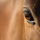 Reflections Of A Stallion's Soul  by Shaun Colin Bell