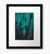 Lavender Silhouette Framed Print