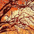 Coppertone Branches by Rasendyll