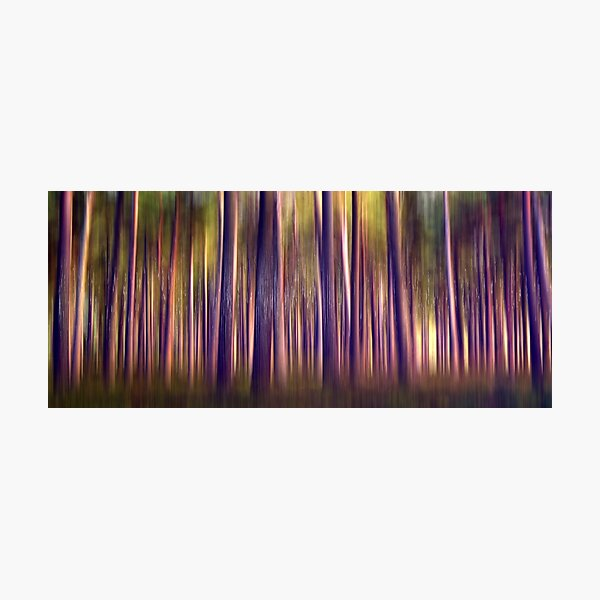 Through the Pines (26) Photographic Print